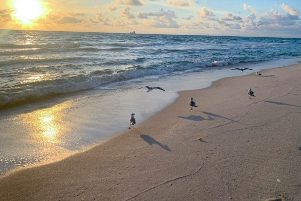 seagulls spread wings over the foamy waves in south Florida at dawn
